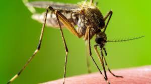 Các giải pháp chống muỗi an toàn cho gia đình mùa dịch.